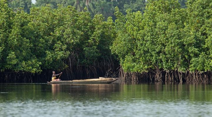 De jungle van Gambia